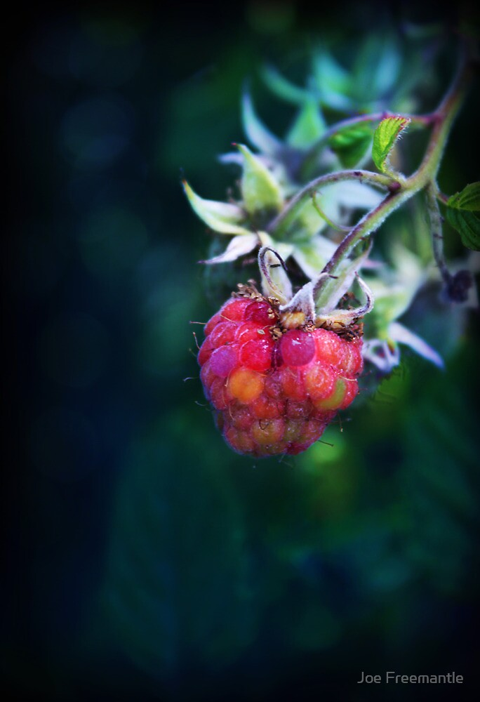 Rasberry  by Joe Freemantle