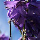 Purple Flower Wall Art by Michael  Addison