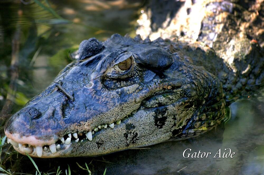 Gator Aide by JpPhotos