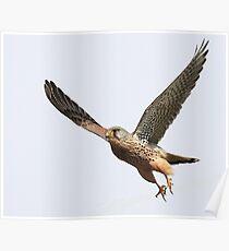 Flight Of The Kestrel Poster
