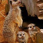 Meerkat Family by Muppet1970