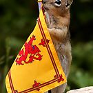 Jasper and The Royal Flag of Scotland by Betsy  Seeton