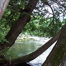 AuSable River by cdcantrell