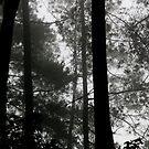 Trees Through Mist, Puncak Pass, Java by Ashlee Betteridge
