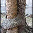 Trees That Hug by Debbie Robbins