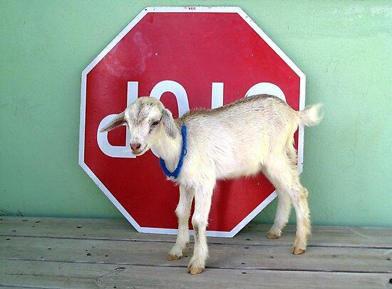 Stop Baby Goat  by nadinecreates