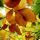 Autumn Glow by Ludwig Wagner