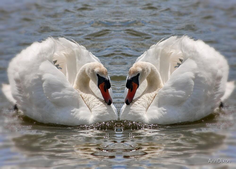 Twin Swans in Gemini by AnnDixon