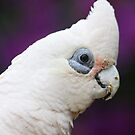 Corella by jansimpressions