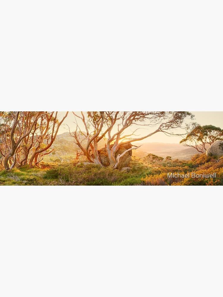 Charlotte Pass Trees, Kosciuszko, New South Wales, Australia by Chockstone