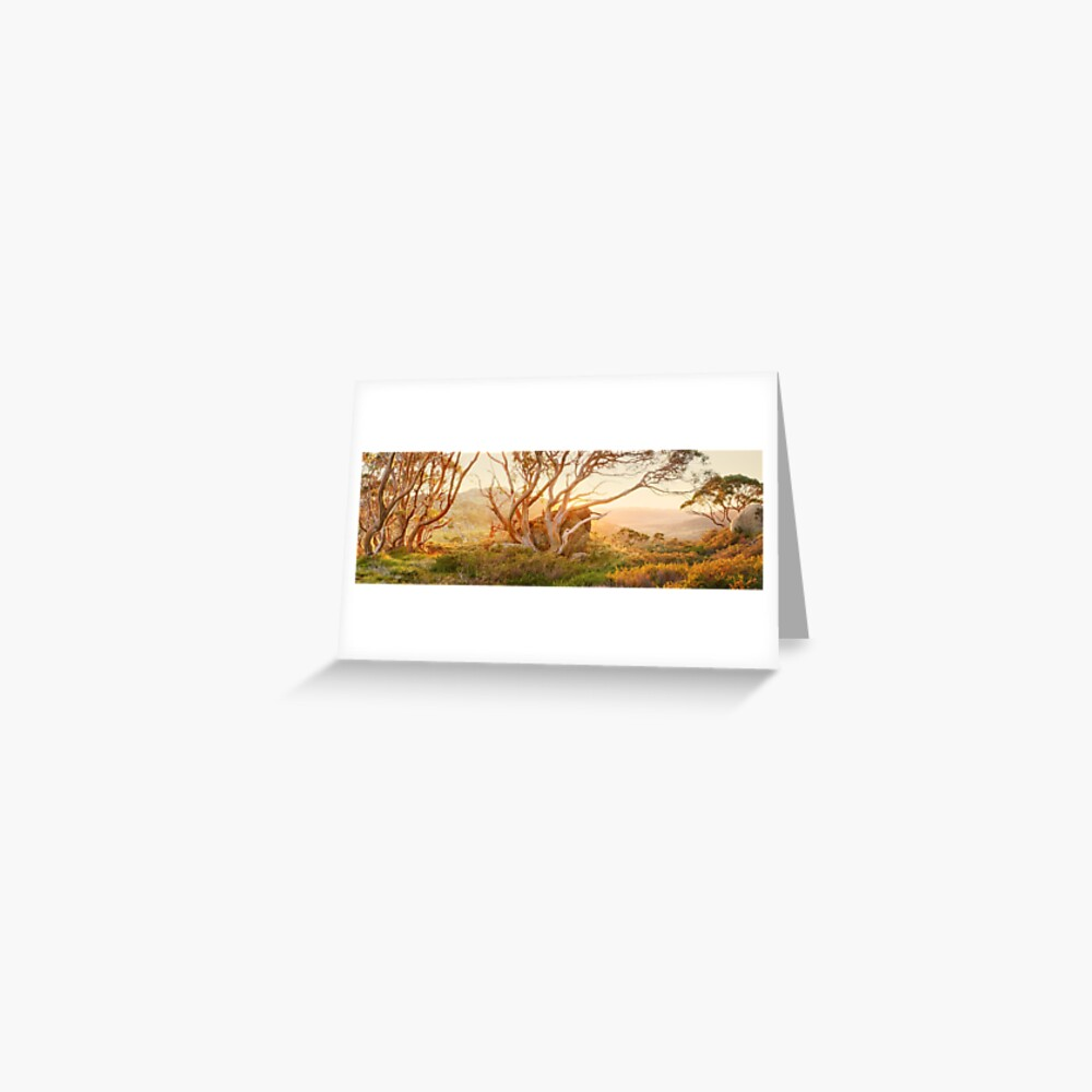 Charlotte Pass Trees, Kosciuszko, New South Wales, Australia Greeting Card