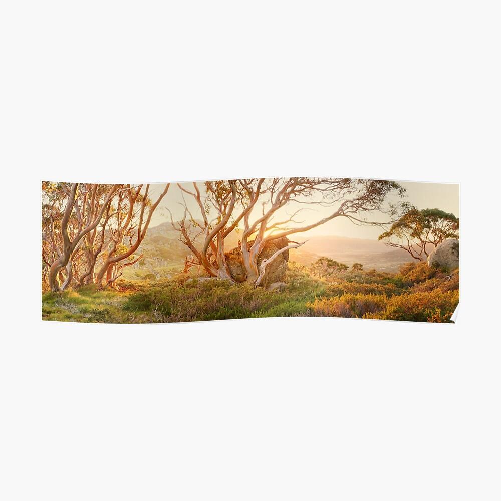 Charlotte Pass Trees, Kosciuszko, New South Wales, Australia Poster