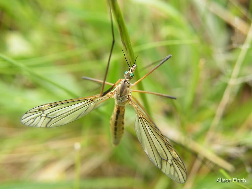 Green-eyed, long-legged beauty by Alison Finch