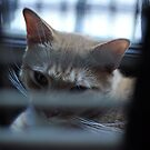 You cant see me by DarylE