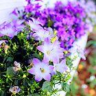 «Púrpura» de AyaSketchr1496