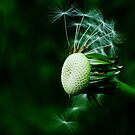 Dandelion in seed by Sophia Grace