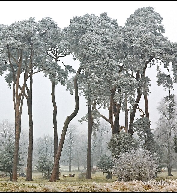 Frosted trees by almaalice