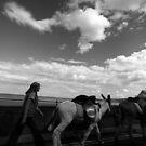 Scarborough Donkeys by jennimarshall