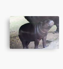 Smile - pygmy hippo baby with infectious grin Metal Print