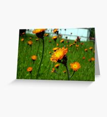 Field of Glory Greeting Card