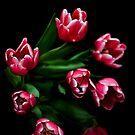 Cerise Tulips on Black by Wendy Kennedy