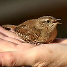 Bird in the hand by Val Saxby