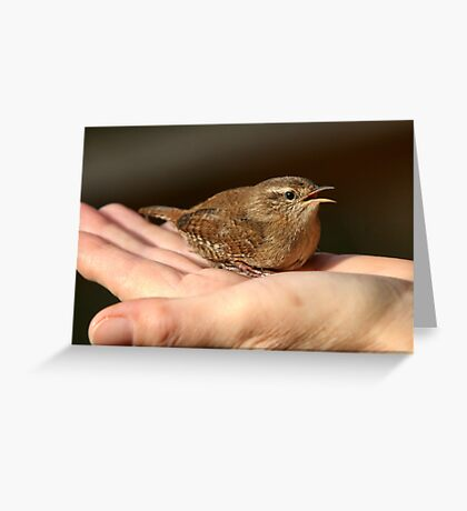 Bird in the hand Greeting Card