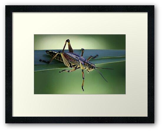 Grass Hopper by Paulette1021