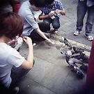 the birds by Tony Day