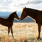 Siblings stare down  by Nicole  Markmann Nelson