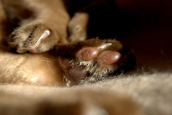 paws & claws © 2010 patricia vannucci  by PERUGINA