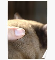 the touch of his fur © 2010 patricia vannucci Poster