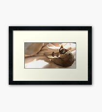 my spot in the sun © 2010 patricia vannucci Framed Print