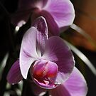 Orchids in sunlight by Sophia Grace