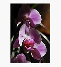Orchids in sunlight Photographic Print