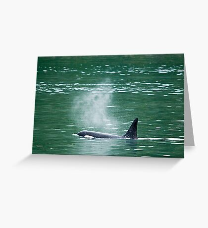 Orca Whale 1  Greeting Card