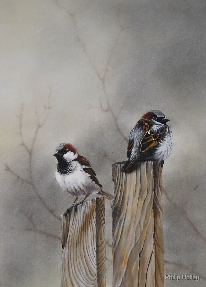 """""""Spuggies on the fence"""" by Philip Holley"""