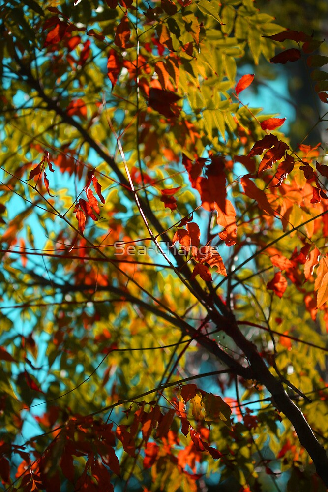 Autumn Leaves by Sea-Change
