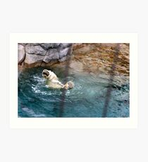 Forward 2 1/2 Somersaults Pike with a twist Art Print