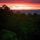 Rainforest Dawn by Paul Moore
