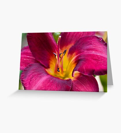 Yet another Day lily Greeting Card