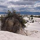 """Stranded!""  (Sand dunes) by Nancy Richard"
