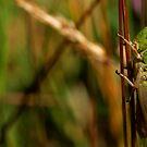 Grasshopper by Michael  Addison