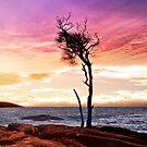 Sonnenuntergang über Honeymoon Bay 2 von Alex Preiss