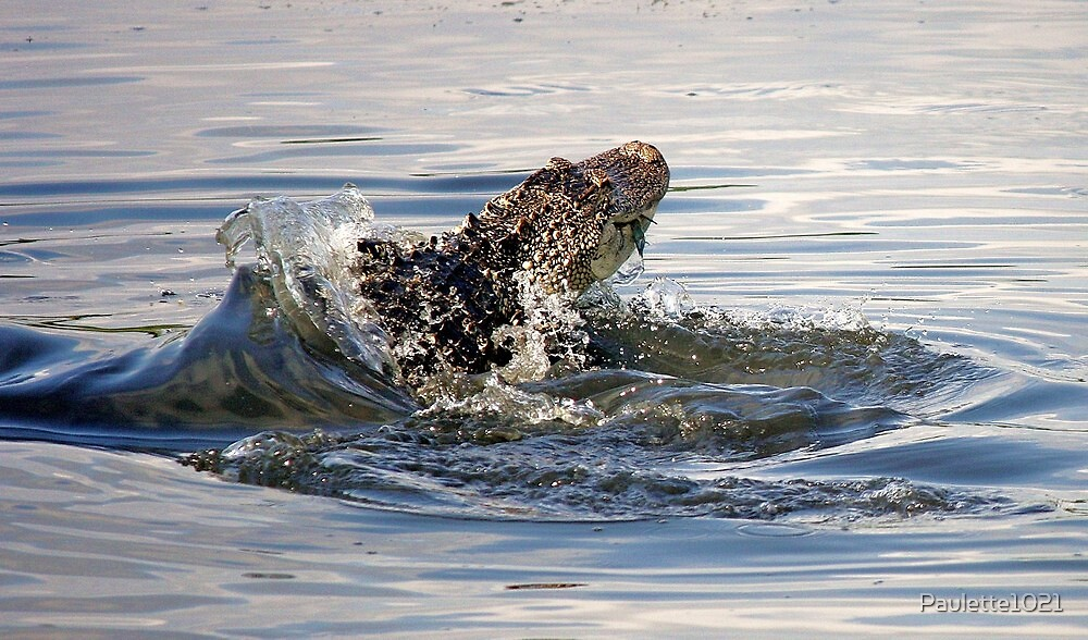 Alligator Catching a Crab on the Go by Paulette1021