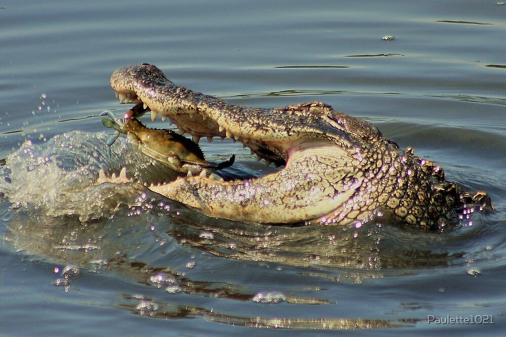 Crab trying to Get Away from this Alligator by Paulette1021