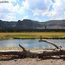 Yellowstone Beauty by signaturelaurel