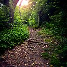 Dirt Path by psnoonan