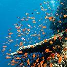 Red Sea by muzy
