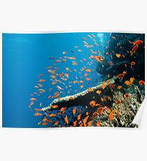 Red Sea Poster